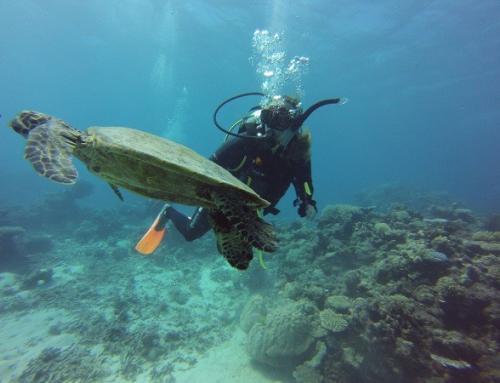 Cairns – Am Great Barrier Reef mit Nemo