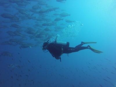 Yongala Dive - Schiffswrack