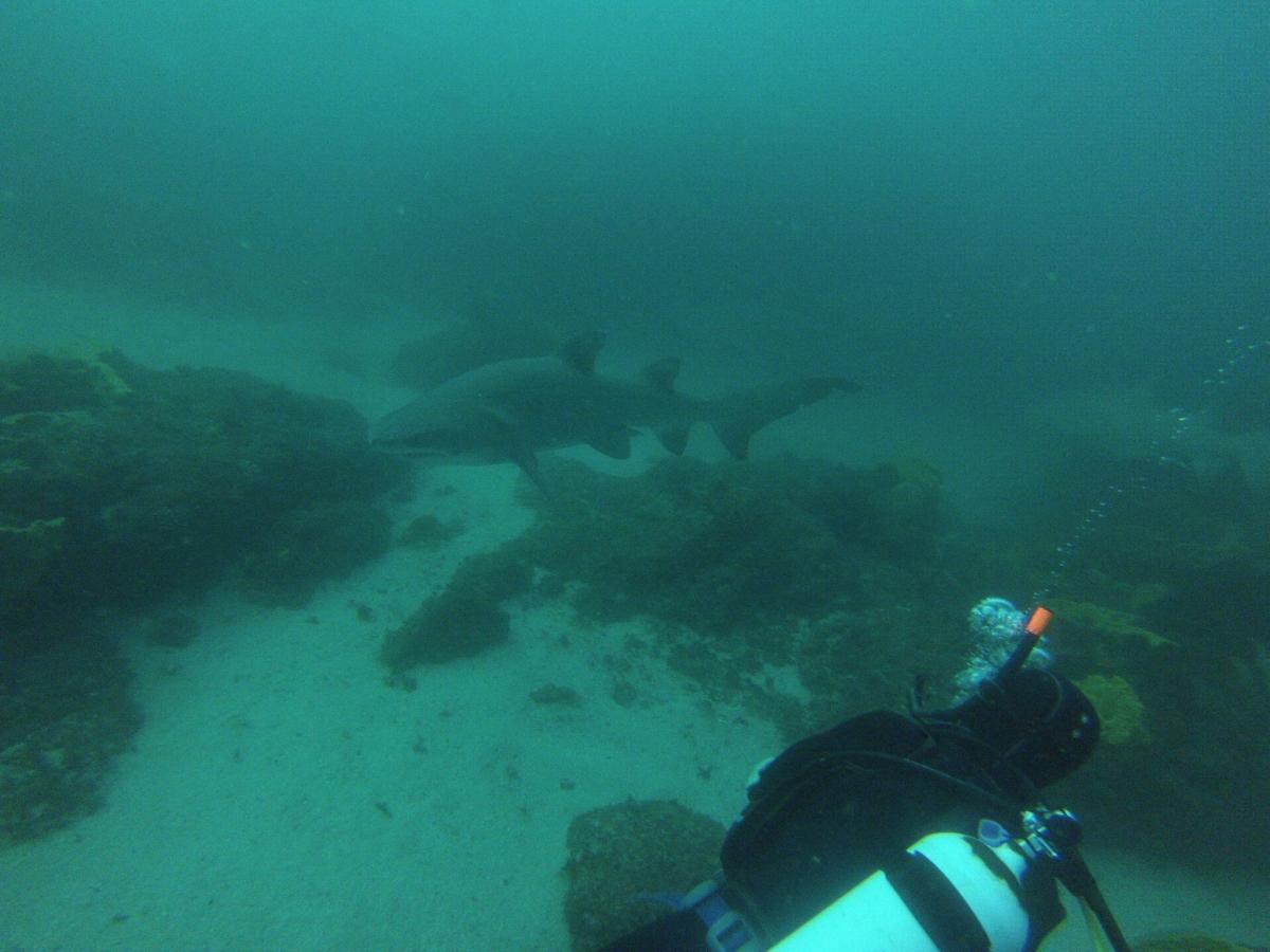 Byron Bay Tauchen