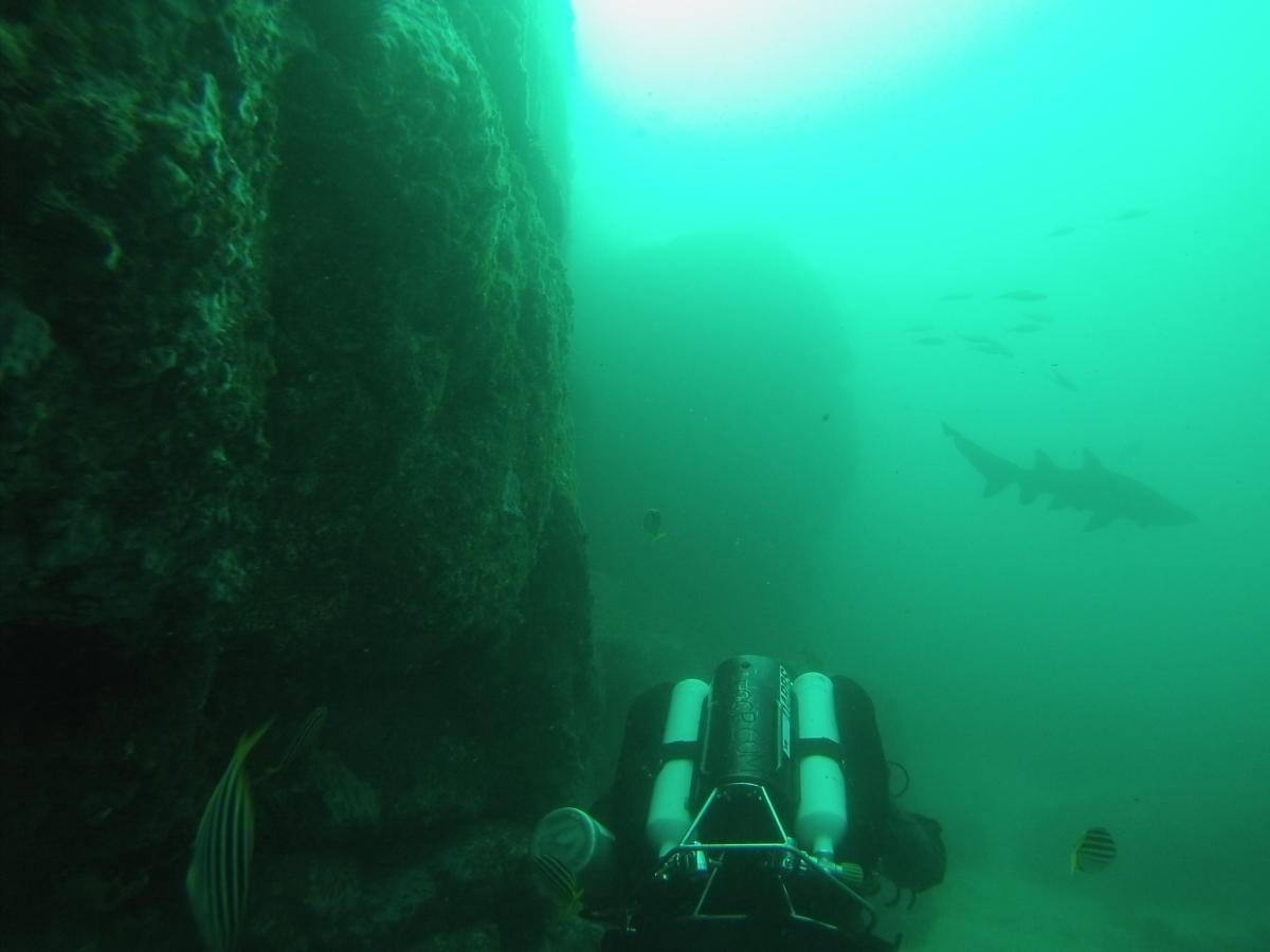 Seal Rocks Tauchen
