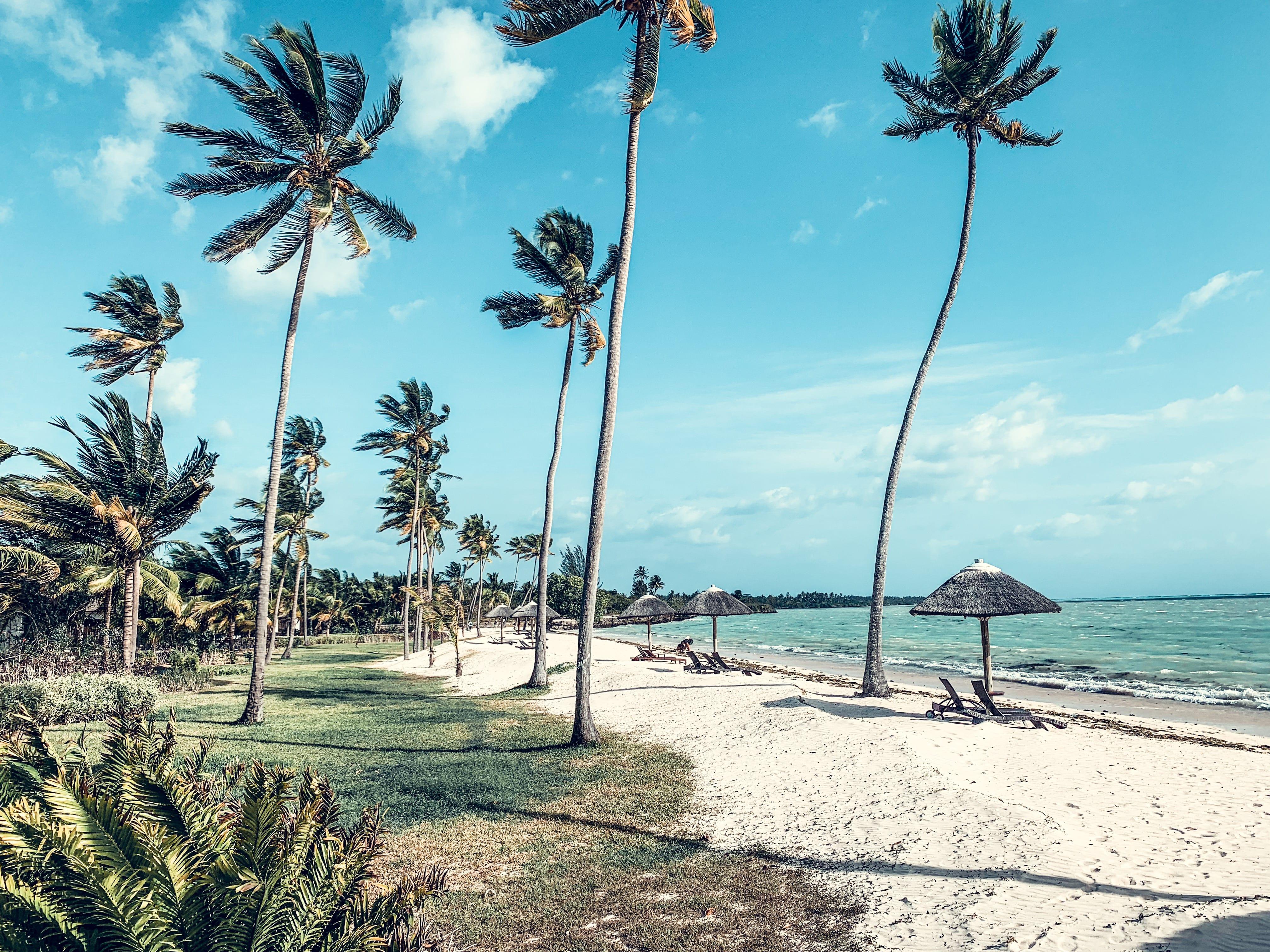 Sansibar Palmen